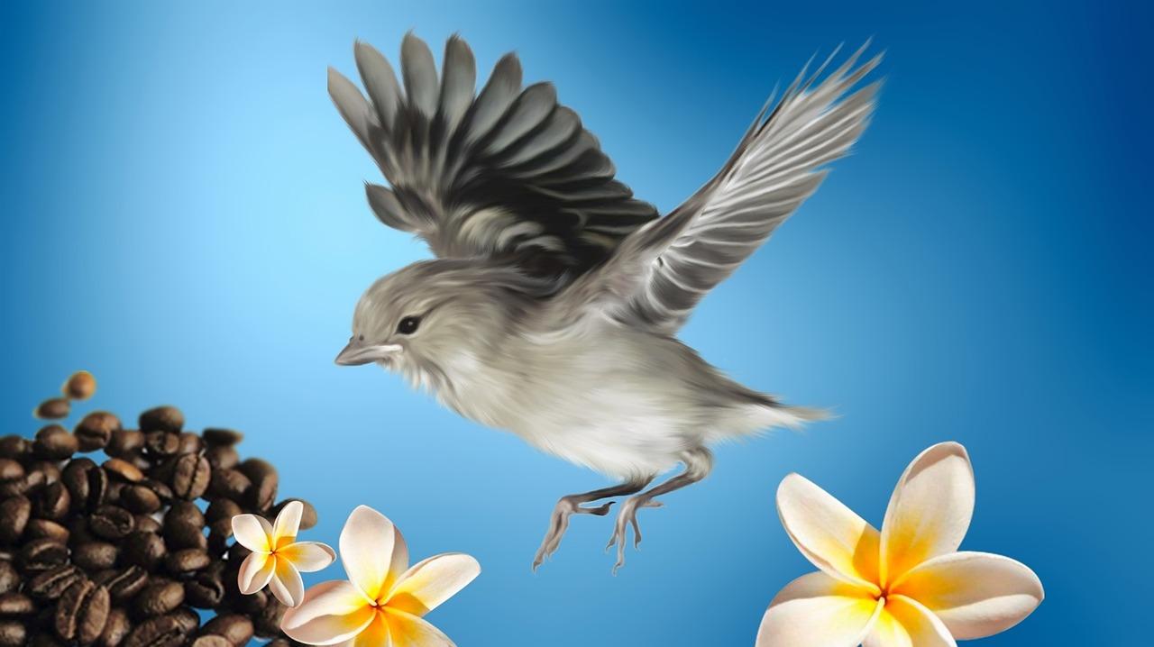 bird-877313_1280